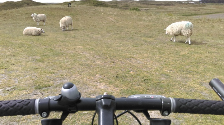 Mountain biking in Texel