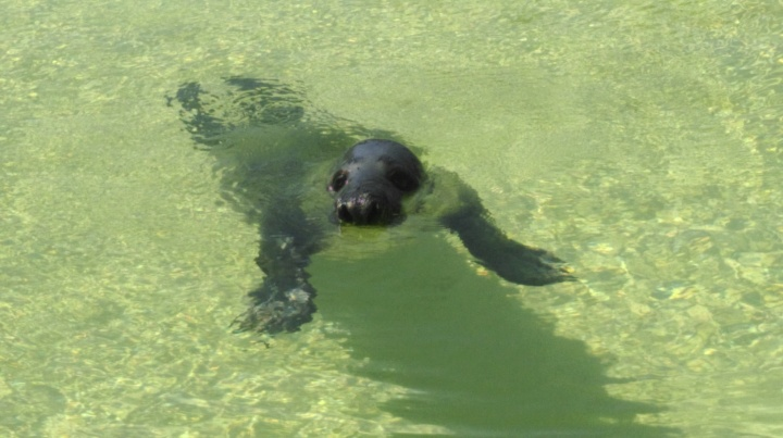 Seal at Ecomare